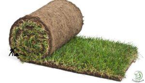 Hazır doğal rulo çim
