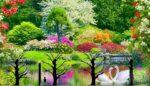 Ağaç Budama Mevsimi