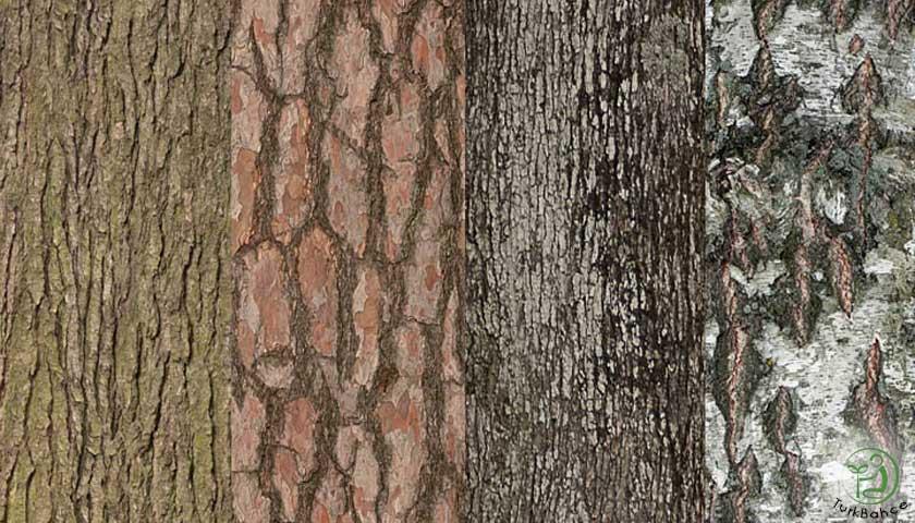 Dekoratif Ağaç Kabuğu Parçaları
