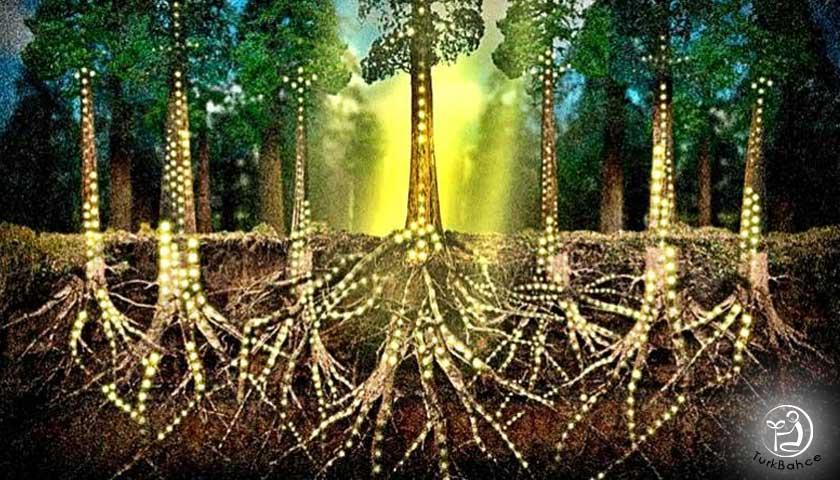 Ağaçların sosyal ağı