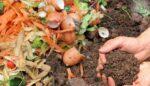 Toprağın gıdası organik atıklar