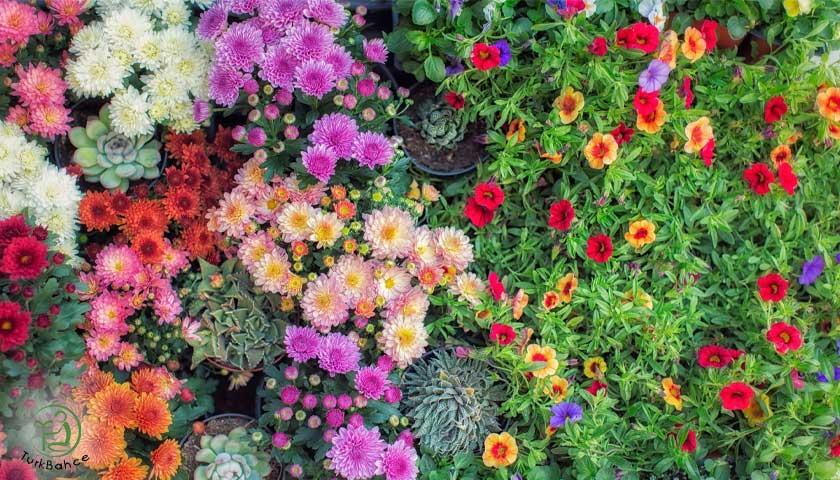 Baharda Açan Çiçekler