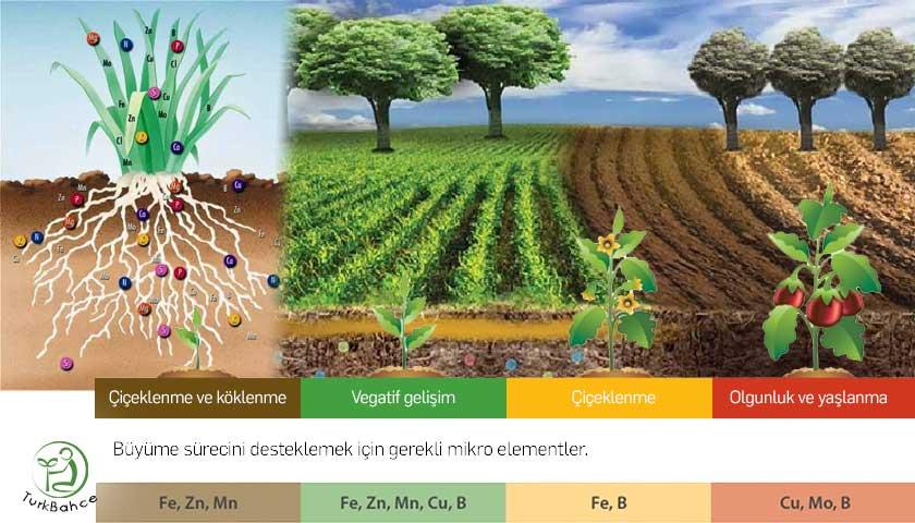 Bitki besleme elementler