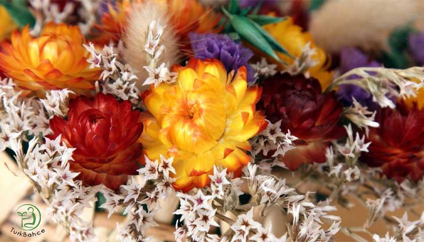 Çiçek kurutma