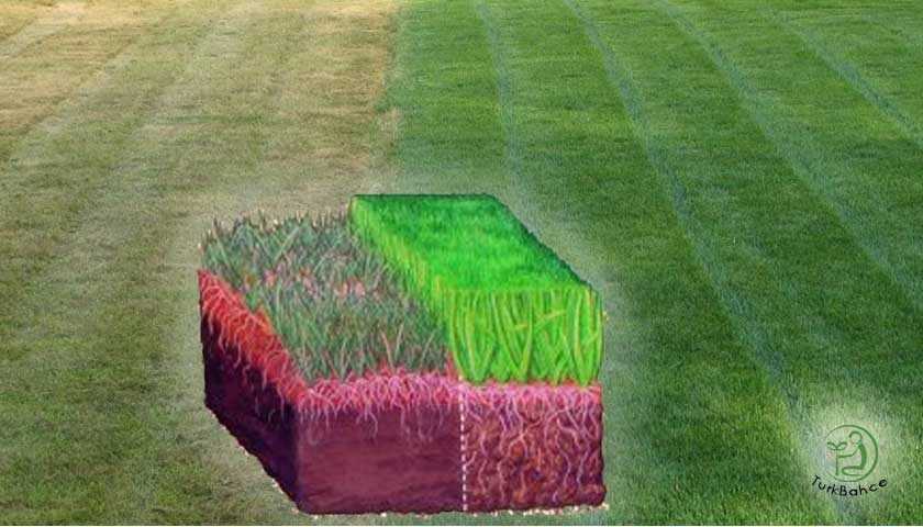 Çimlerin doğru beslenmesi, gübrelenmesi