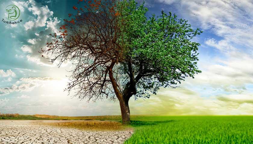 Ağaç ve kuraklık