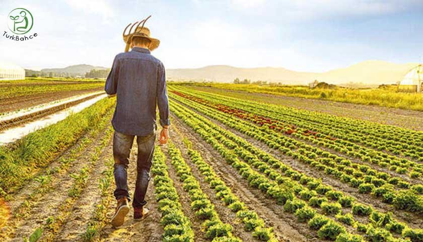 Tarlada yürüyen çiftçi