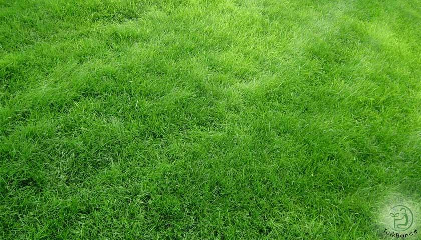 doğal yeşil çim